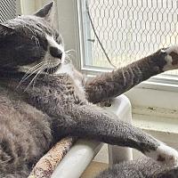 Adopt A Pet :: Barge - dog like personality! - Salisbury, MA