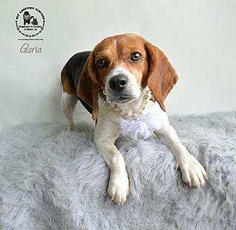 Beagle Mix Dog for adoption in Kenner, Louisiana - Gloria
