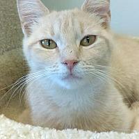 Adopt A Pet :: Sammi - Austintown, OH