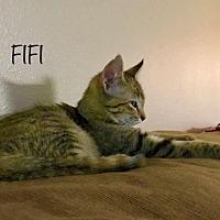 Adopt A Pet :: FIFI - Huntsville, AL