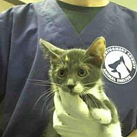 Adopt A Pet :: A291366 - Conroe, TX