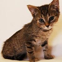 Adopt A Pet :: Pablo - Toccoa, GA