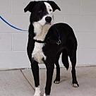 Adopt A Pet :: Claire (TIA)