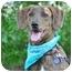 Photo 1 - Plott Hound Mix Dog for adoption in Portsmouth, Rhode Island - Norman