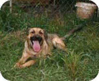 Shepherd (Unknown Type)/Spaniel (Unknown Type) Mix Dog for adoption in Remlap, Alabama - Brownlea