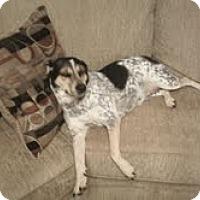 Adopt A Pet :: Suzy Q - Conway, AR