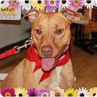 Adopt A Pet :: Redd - Orlando, FL