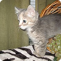 Adopt A Pet :: LollyPop - Clearfield, UT