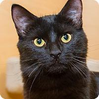 Adopt A Pet :: Lucy - Irvine, CA