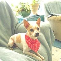 Adopt A Pet :: Axle -Adopted! - Kannapolis, NC