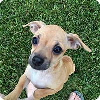 Adopt A Pet :: Ethel - Sinking Spring, PA