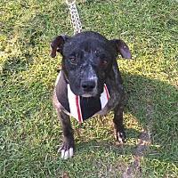 Adopt A Pet :: Bean - Vidor, TX