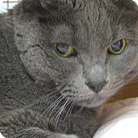 Adopt A Pet :: DECLAWED COLE THE CAT - Brea, CA