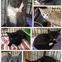 Adopt A Pet :: Gwynn 1599 - Alva, OK