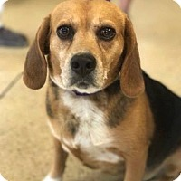 Adopt A Pet :: missy - Marion, IN