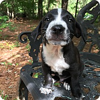 Adopt A Pet :: Poe - Greensboro, GA
