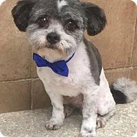 Adopt A Pet :: I'M ADOPTED Georgie - Oswego, IL
