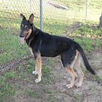 Adopt A Pet :: COURAGE - Panama City, FL