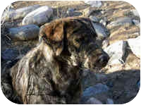 Hound (Unknown Type) Mix Dog for adoption in Santa Fe, New Mexico - Sunflower