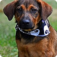 Adopt A Pet :: Riley - in Maine - kennebunkport, ME