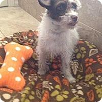 Adopt A Pet :: Darling - Oceanside, CA