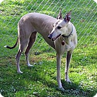 Adopt A Pet :: Lisa - Fremont, OH