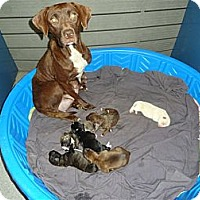 Adopt A Pet :: Dolly - Washington, NC