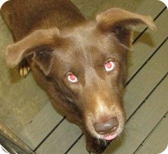 Labrador Retriever Mix Dog for adoption in Aiken, South Carolina - WAYLAN
