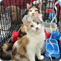 Adopt A Pet :: Daisy - Harrisburg, NC