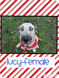 German Shepherd Dog Mix Dog for adoption in Hagerstown, Maryland - Lucy (Pom-do)