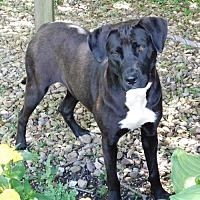 Adopt A Pet :: 50030 Cell Dog Bella aka JP - Zanesville, OH