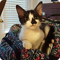 Adopt A Pet :: Dopey - Smithfield, NC
