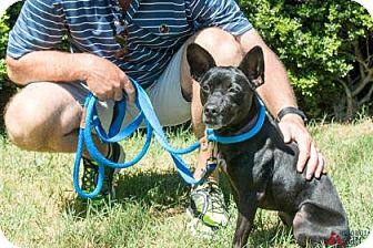 American Pit Bull Terrier Mix Dog for adoption in Suwanee, Georgia - Lola