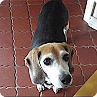 Adopt A Pet :: Patrick - Houston, TX