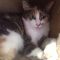 Adopt A Pet :: Orchid - Fremont, OH