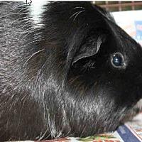 Adopt A Pet :: *Urgent* Mecca - Fullerton, CA