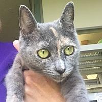 Adopt A Pet :: Wonda - Jackson, MI