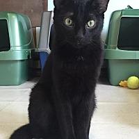 Adopt A Pet :: Valor - Cambridge, MD