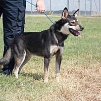 Adopt A Pet :: Max - Pittsburg, KS