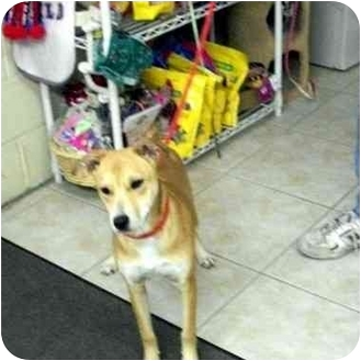 Labrador Retriever Mix Dog for adoption in Slidell, Louisiana - Tinsel
