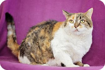 Domestic Shorthair Cat for adoption in Port Hope, Ontario - Cleo