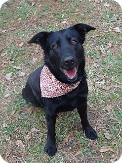 Border Collie/Labrador Retriever Mix Dog for adoption in Peachtree City, Georgia - Dahlia