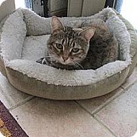Adopt A Pet :: Boo Bear - Acme, PA