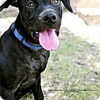 Adopt A Pet :: SONNY - Irving, TX