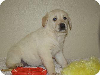 German Shepherd Dog Mix Puppy for adoption in Marshall, Texas - Greta