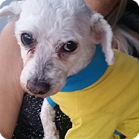 Adopt A Pet :: Belle - Santa Ana, CA