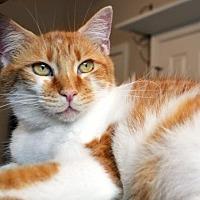 Adopt A Pet :: Lizzy - Johnson City, TN