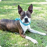 Adopt A Pet :: Abigail - Mocksville, NC