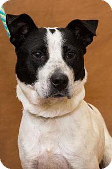 Mixed Breed (Medium) Mix Dog for adoption in Chesapeake, Virginia - Sadie 35082530
