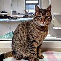 Adopt A Pet :: Makayla - Fremont, OH
